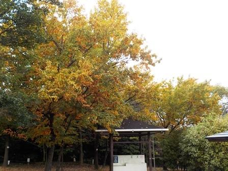 ブログで使用:秋1.jpg